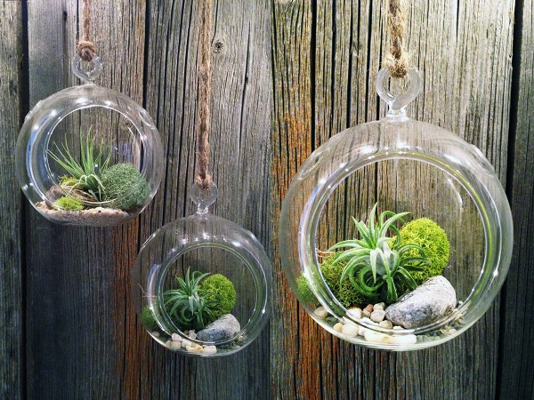 Air Plants: an urban house plant