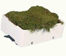 fresh-flat-carpet-moss-wholesale