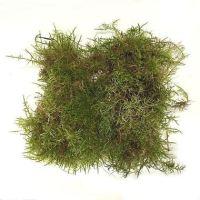 sphagnum-moss-english-wholesale
