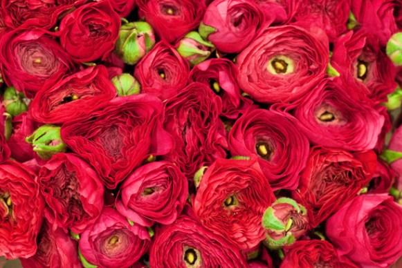 9-Ranunculus-Flowerona