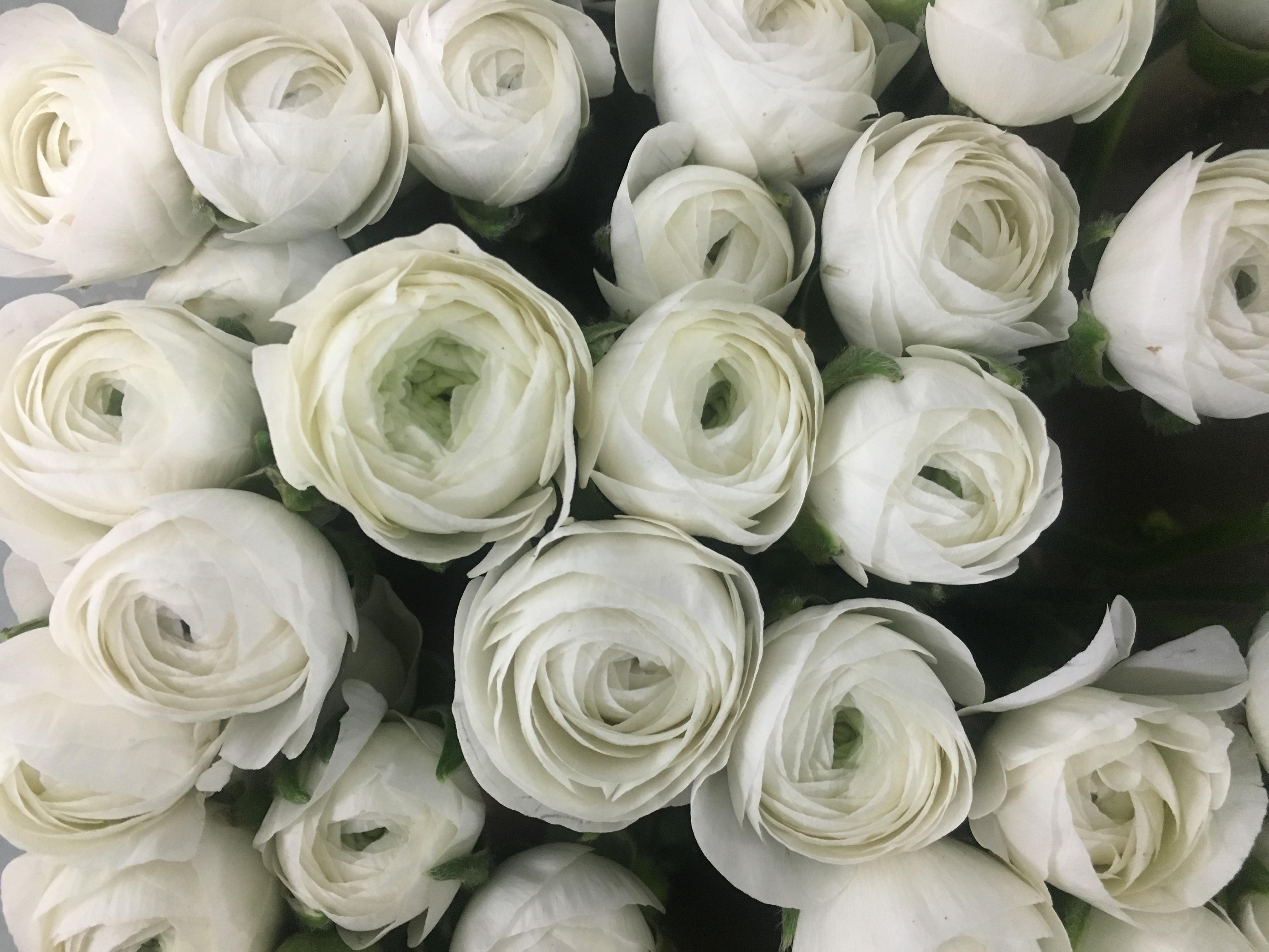 Flowers In Season February Triangle Nursery