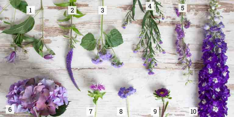 Summer Purple Blooms