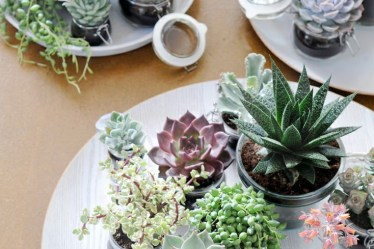 Buy Succulents Plants Direct in the UK at Wholesale Prices