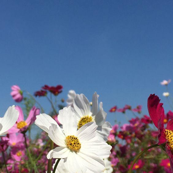 Wholesale Flowers Direct UK
