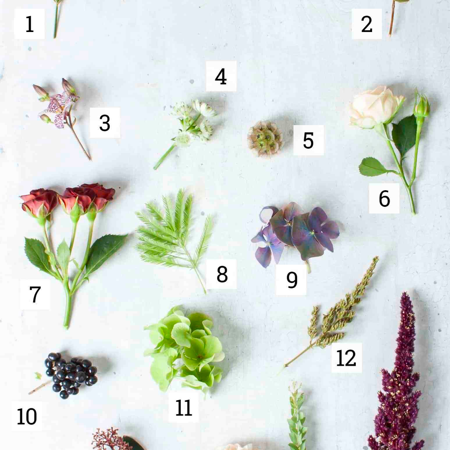 Discover our Favourite Fall Flowers