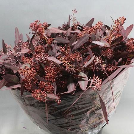 October Blooms to Market!