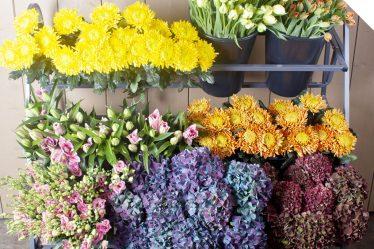 Seasonal Mix Flower Varieties