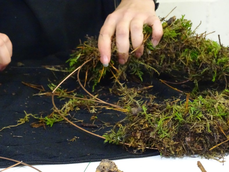 How to Create Echeveria Moss Wreath - Triangle Nursery