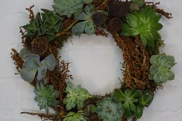 DIY Echeveria Wreath - Triangle Nursery