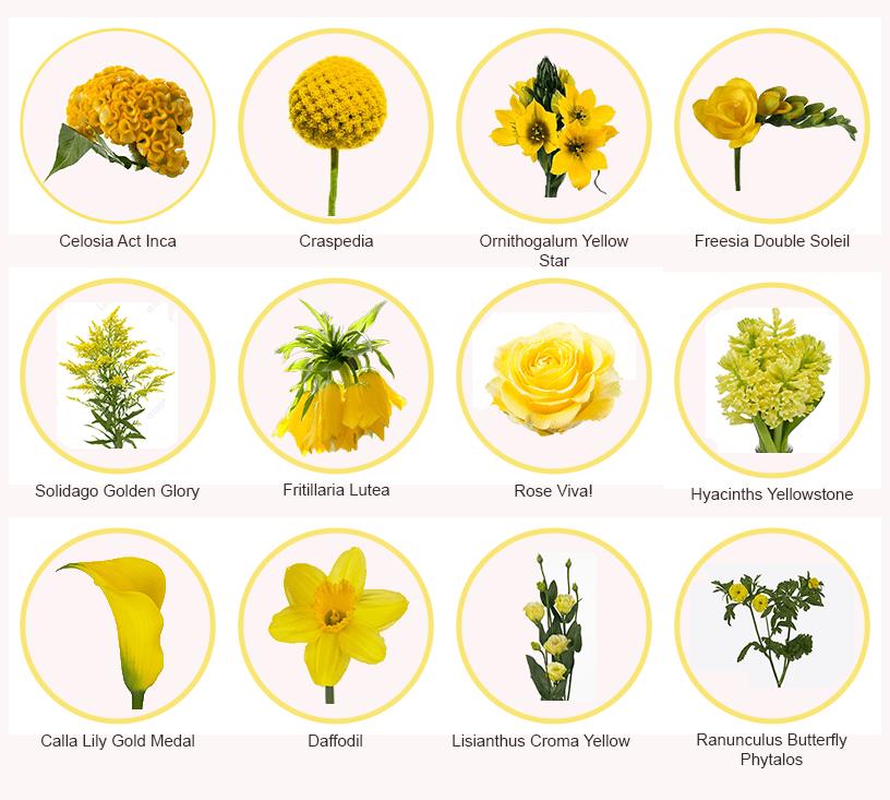 Yellow Flowers - Triangle Nursery Ltd