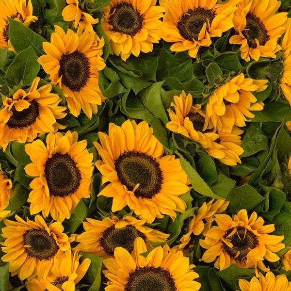 June New Blooms to Market 2019!