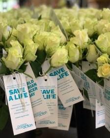 Triangle Nursery Ltd - Wholesale Flowers Direct UK