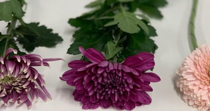 The Flower Hub Flower Guides