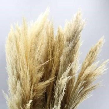 Pampas-Grass-Dried-100cm.jpg