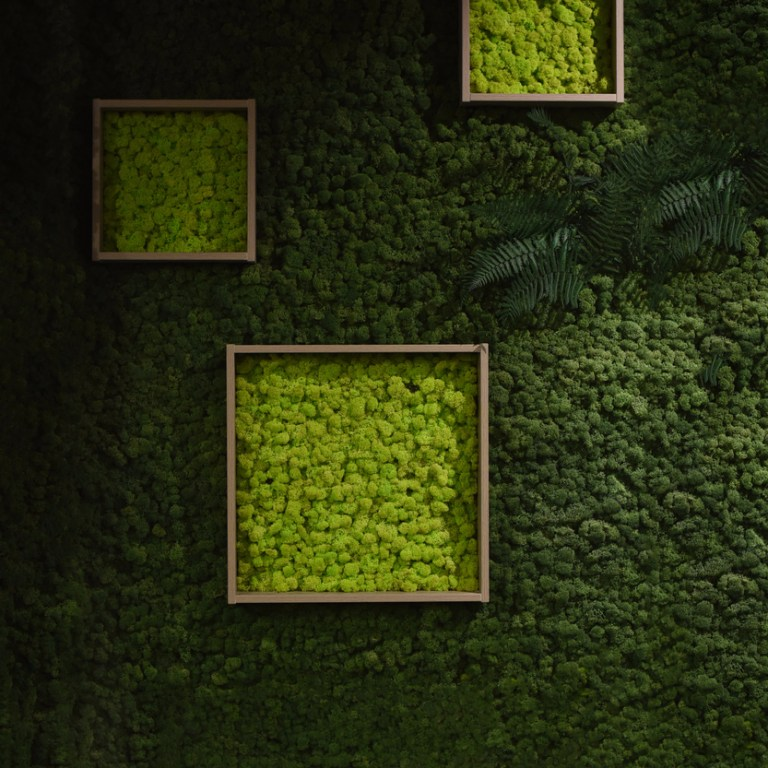 Introduction to Moss