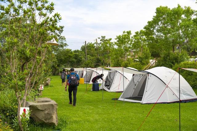 苗栗景點推薦-黃金梯田露營區