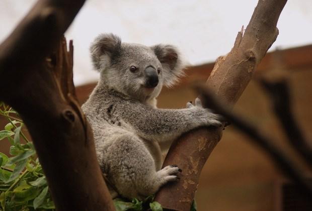 Destinations in Australia