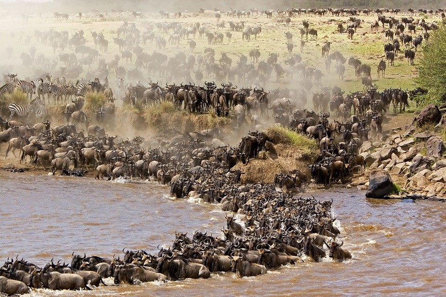 Best Time to See Masai Great Migration