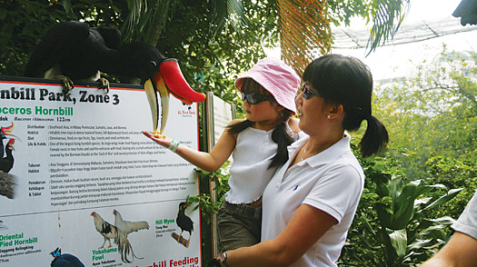Feed tropical birds during your family trip in Malaysia