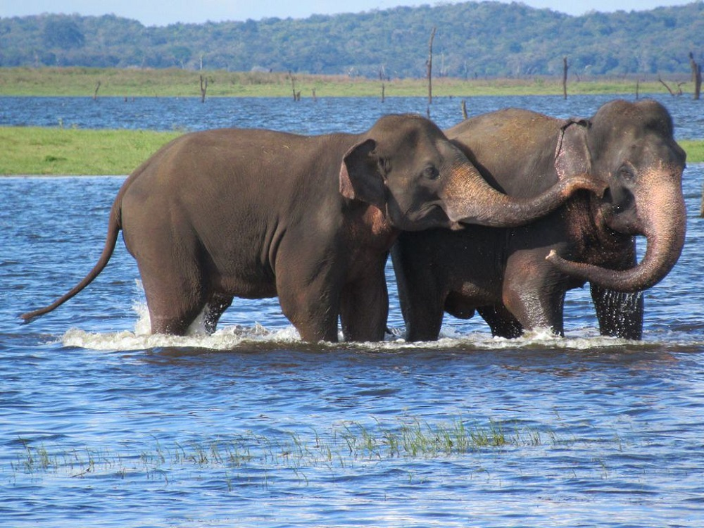 Best Time To See Elephants Gathering