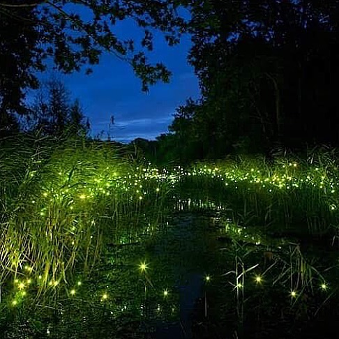 Watch fireflies at Kuala Selangor