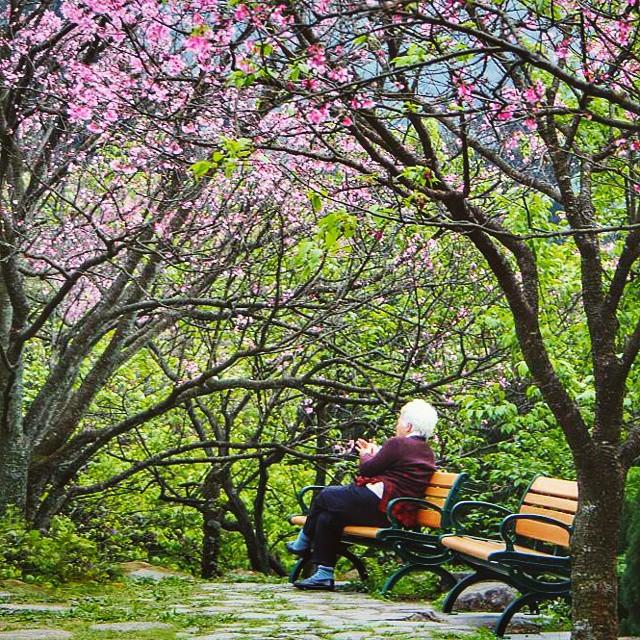 Cherry Blossom Prediction Taiwan 2020