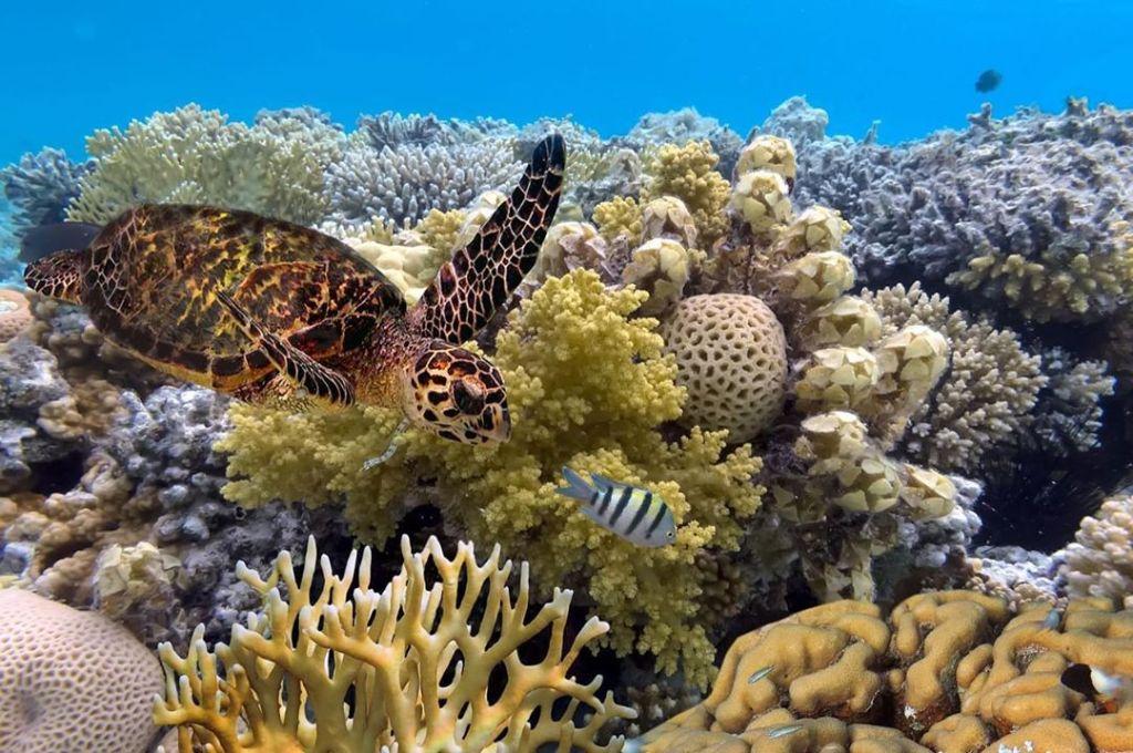 Australia Fun Facts, Great Barrier Reef