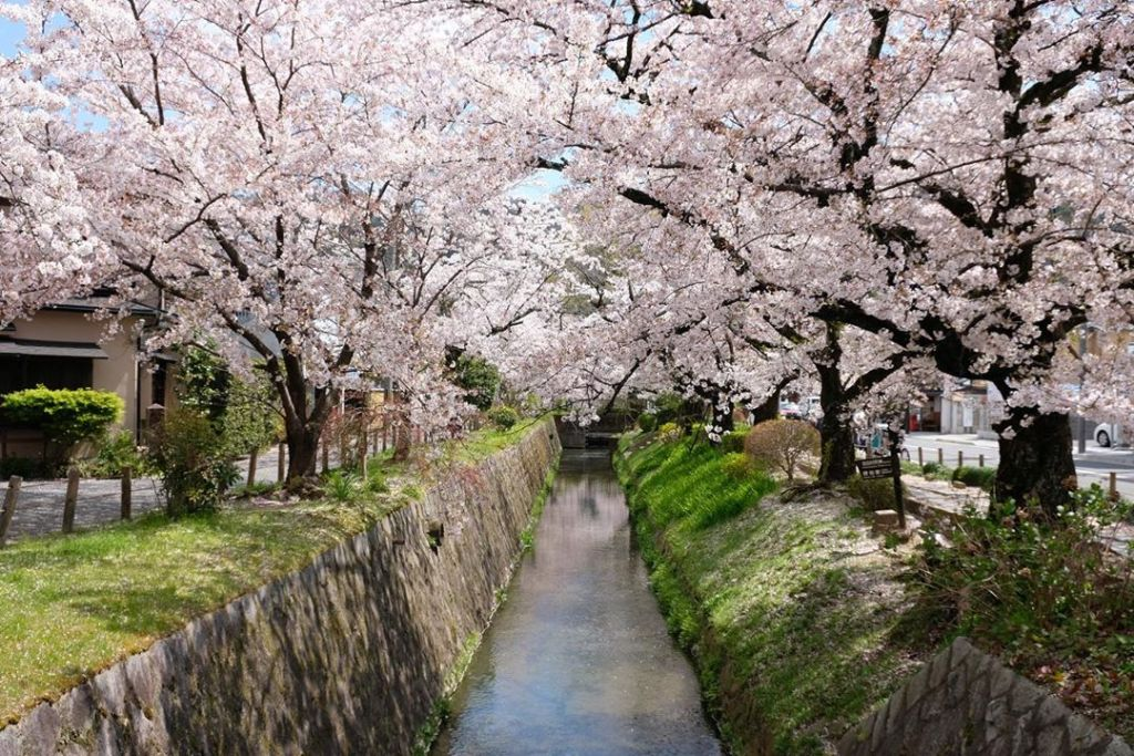 The Philosopher's Walk is a pedestrian path that follows a cherry-tree-lined canal.