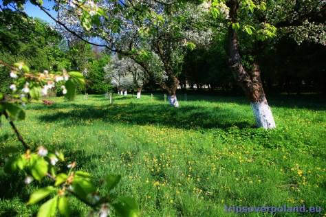 Park i sad w Nakle