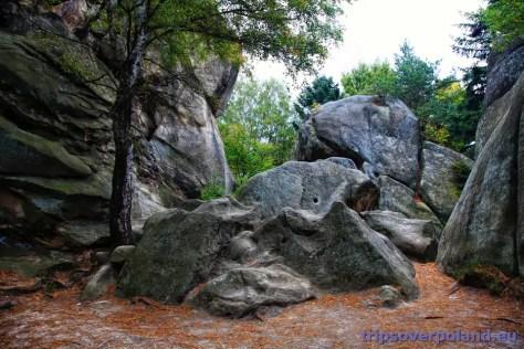 Rezerwat przyrody Prządki