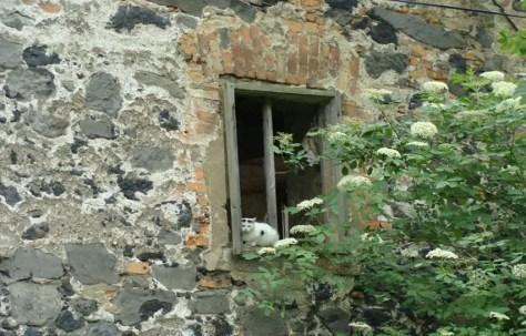 Fragment budynku folwarcznego w Radomierzycach