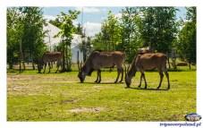 ZOO Safari Borysew