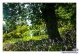 Ogród BUW