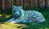 Borysew - ZOO Safari