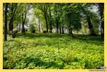 Zespół dworsko-parkowy w miejscowości Udrycze Koniec.