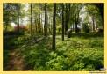 Zespół dworsko-parkowy w miejscowości Udrycze Koniec