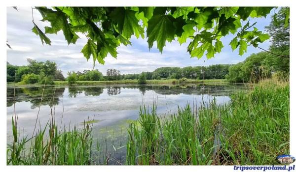 Falenty - rezerwat przyrody