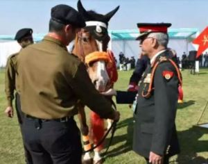 Indian Army's veteran horse 'Rio' gets biggest honor