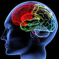 Brain and Intelligence