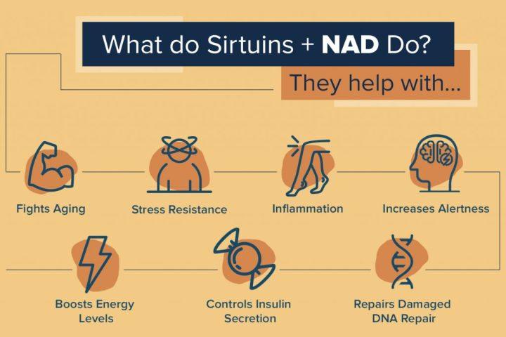 Sirtuins and NAD+