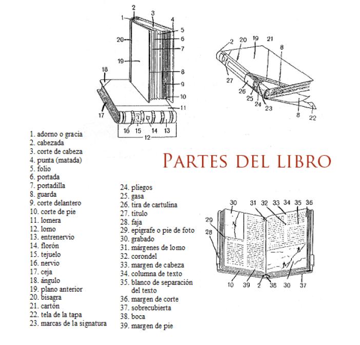 partes del libro tsedi