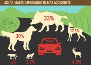 animales y accidentes