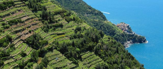 05 Cinque Terre - a vineyard with a view