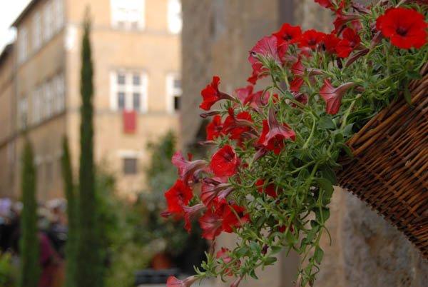 05 Pienza e i fiori