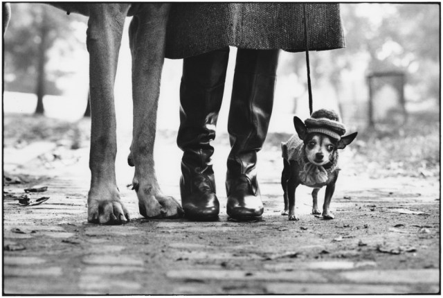 Elliott Erwitt, New York City, USA, 1974 - Felix, Gladys and Rover