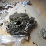 Destroyed Nest
