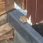 Friendly toad checking out the new edge