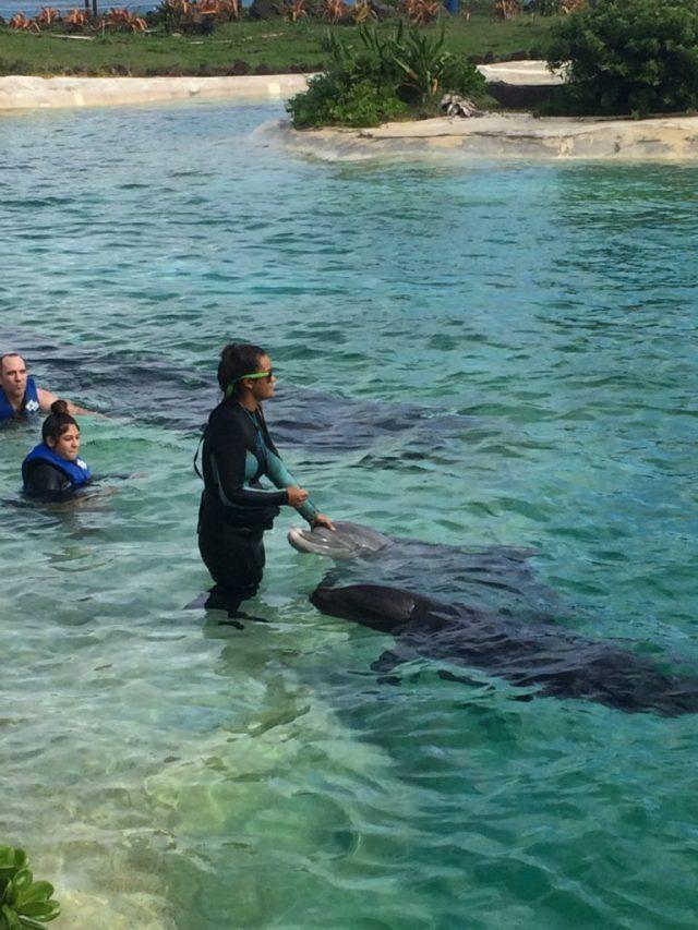 Sea Life porpoises