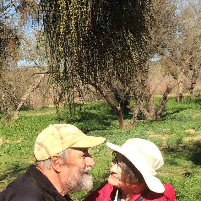 A kiss under real mistletoe in Arizona