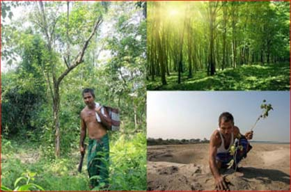 payeng is an environmental activist from the mishing tribe on majuli island. Jadav Payeng The Forest Man Of India Blogs